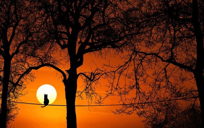 tree-3063715_1280